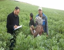 عمان اليوم - شركة طلابية عُمانية تبتكر منتج يطيل عمر الخضروات والفواكه مستخلصاً من شجرة «البمبر»