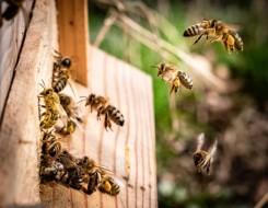عمان اليوم - حكاية ثلاثة إخوة حولوا تجارة العسل من هواية إلى حرفة في عُمان