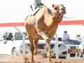 عمان اليوم - انطلاقة المحطة الثانية من المهرجان السنوي لسباقات الهجن في عُمان