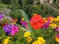 عمان اليوم - أجمل الحدائق والمحميات الطبيعية بالأردن للتنزه في الخريف